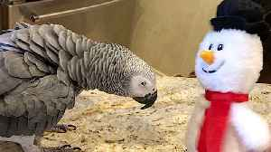 Dancing parrot and snowman have some awesome moves [Video]