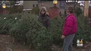 Price Of Christmas Trees Goes Up For 3rd Straight Year [Video]