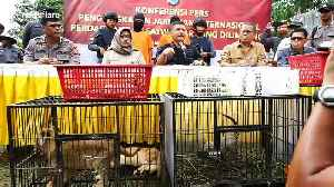 Indonesian police foil the smuggling of protected animals from abroad [Video]