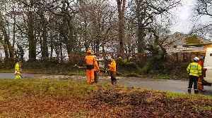 High winds hit UK's Devon, taking down trees and power lines [Video]