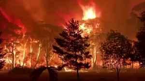 'Crowning' bushfire rips though treetops in Australia [Video]