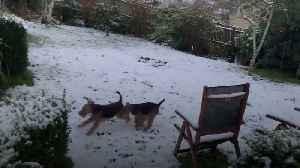 Dogs slip and slide in fresh snowfall