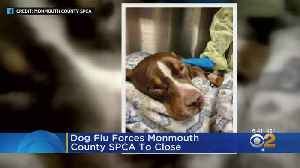 Dog Flu Forces Monmouth County SPCA To Close [Video]