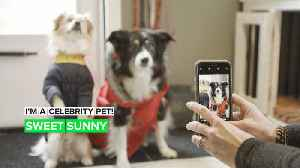 I'm a Celebrity Pet! How Sunny the blind dog shows people the way [Video]