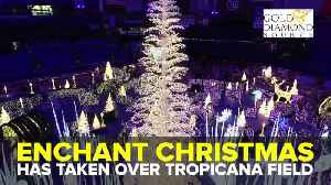 Get a look inside Enchant Christmas at Tropicana Field | Taste and See Tampa Bay [Video]