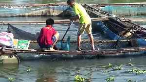 News video: Locals battle to save catfish from river drying up in northern Thailand
