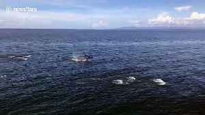 Pod of dolphins swim alongside boat in the Philippines [Video]