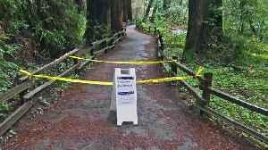 Hiker Killed by Falling Tree on Christmas Eve in Muir Woods [Video]