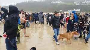 UK swimmers brave chilly temperatures as they take Boxing Day dip in Cornwall [Video]