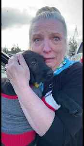 Mom surprised with Christmas puppy after losing 1-year-old Labrador [Video]