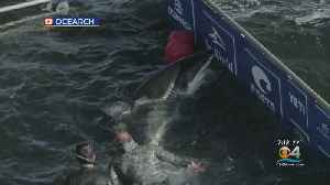 Great White Shark Tracked To South Florida Waters [Video]