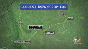Puppies Reportedly Thrown From Moving Car In El Paso County [Video]