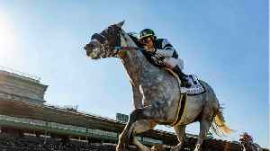 Another Horse Dies At Santa Anita Park Bringing The Death Toll To 38 [Video]