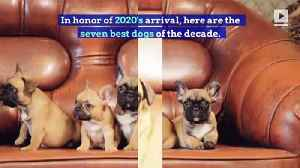 7 Best Dogs of the Decade [Video]