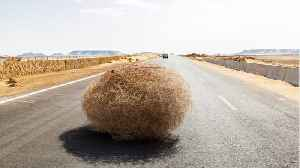 Tumbleweeds Blocked A Washington Highway, Trapping Motorists In Their Cars [Video]