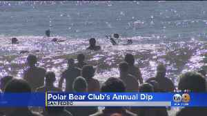 Polar Bear Club Members Take Annual Chilly Plunge [Video]