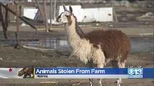 Llamas Stolen From Riverside County Farm [Video]