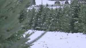 How to Dispose Of Christmas Trees And Wreaths Properly [Video]