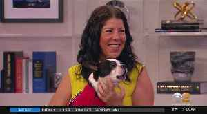 'The Pet Lady' Offers Helpful Tips For Traveling With Your Pet [Video]