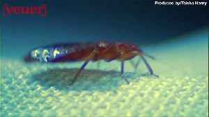 Bed Bugs Found in a Pennsylvania Walmart [Video]