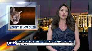 Mountain lion killed after fatally attacking pet dog near Cascade [Video]