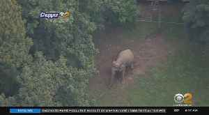 Court Hearing On Bronx Zoo Elephant [Video]