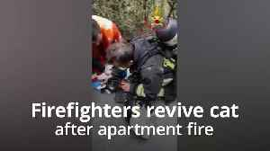Cat is miraculously revived by firefighters [Video]