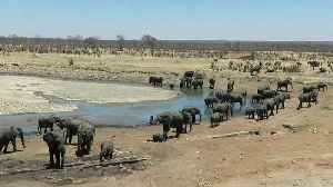 Incredible number of elephants visit waterhole together [Video]