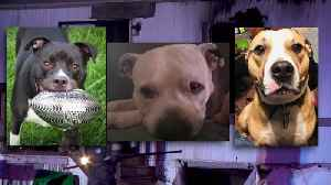 Oklahoma Residents Say Dogs Died Heroes While Saving Them From House Fire [Video]