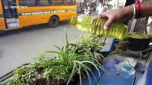 Bus drivers in Indian city hold 'green drive' by planting flowers on their dashboards [Video]
