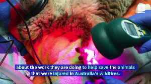 Irwin Family Helping to Save Animals in Danger After Australia Wildfires [Video]