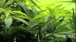 Florida lawmaker speaks out on bill to decriminalize marijuana [Video]
