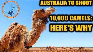 Australia will cull camels as they enter into conflict with aboriginals | Oneindia News [Video]