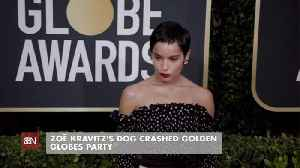 Zoe Kravitz's Dog Is On The Guest List [Video]
