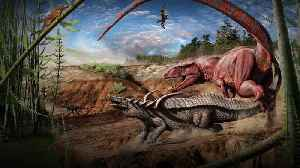 The secret weapon that let dinosaurs take over the planet   Emma Schachner [Video]