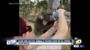 More than 1 billion animals feared dead in Australia fires [Video]