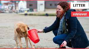 Meet the litter-picking Labrador that LOVES cleaning beaches! [Video]