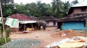Panic grips locals as wild elephant raids village in search of food in eastern India [Video]