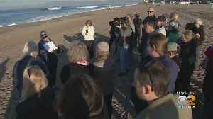 People Flock To Manhattan Beach To See King Tides Come In [Video]