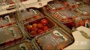 Perdue pushes USMCA ratification while Florida farmers fume over produce dumps [Video]