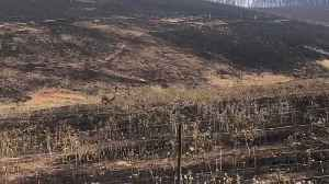 News video: Surviving emu walks scorched earth of New South Wales, Australia