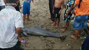 Dolphin washes up on Indonesian beach with injuries sustained from plastic waste [Video]