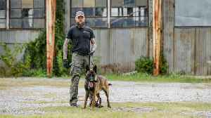 Training The World's Toughest Police Dogs | BIG DOGZ [Video]