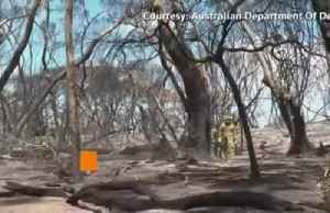 The grim clear up of dead wildlife in Australia's bushfires [Video]