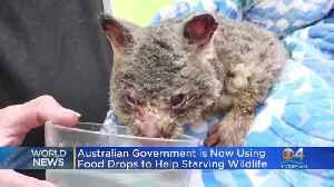 Food Drops To Help Aussie Wildlife [Video]