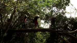 Indigenous tribes gather to protect the Amazon [Video]