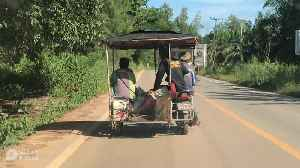 Monkey Rides With Friends On Motorcycle Trailer [Video]