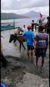 Rescuers save ponies from volcano danger zone in the Philippines [Video]