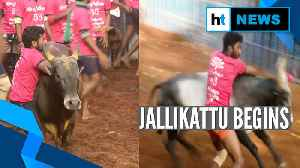 Watch: Bull-taming sport Jallikattu begins in Madurai [Video]