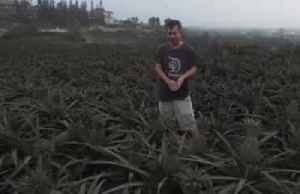 Ash-covered pineapples a woe for Filipino farmer [Video]